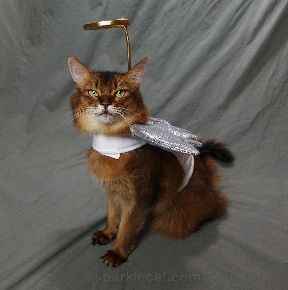 somali cat in angel antics costume