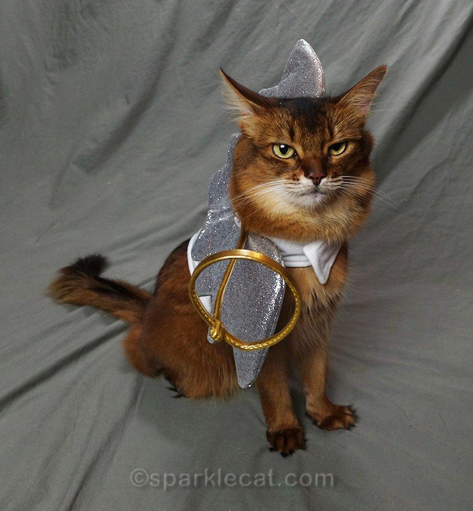 somali cat with wonky angel costume
