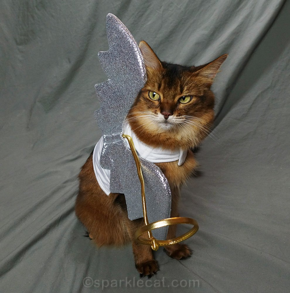 somali cat wondering why someone isn't fixing her angel wings and halo