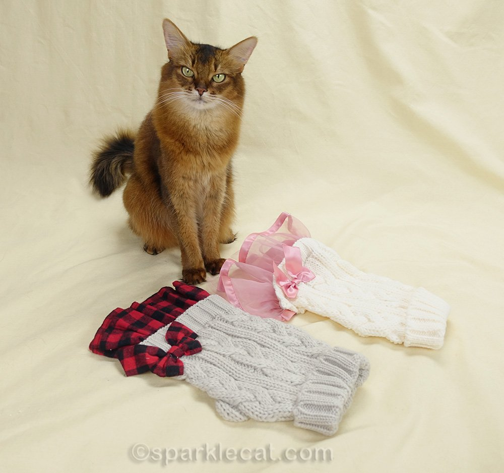 Somali cat with two dresses with the same style