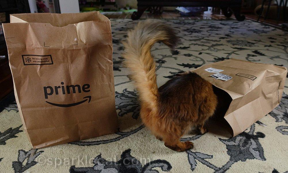 somali cat halfway in bag