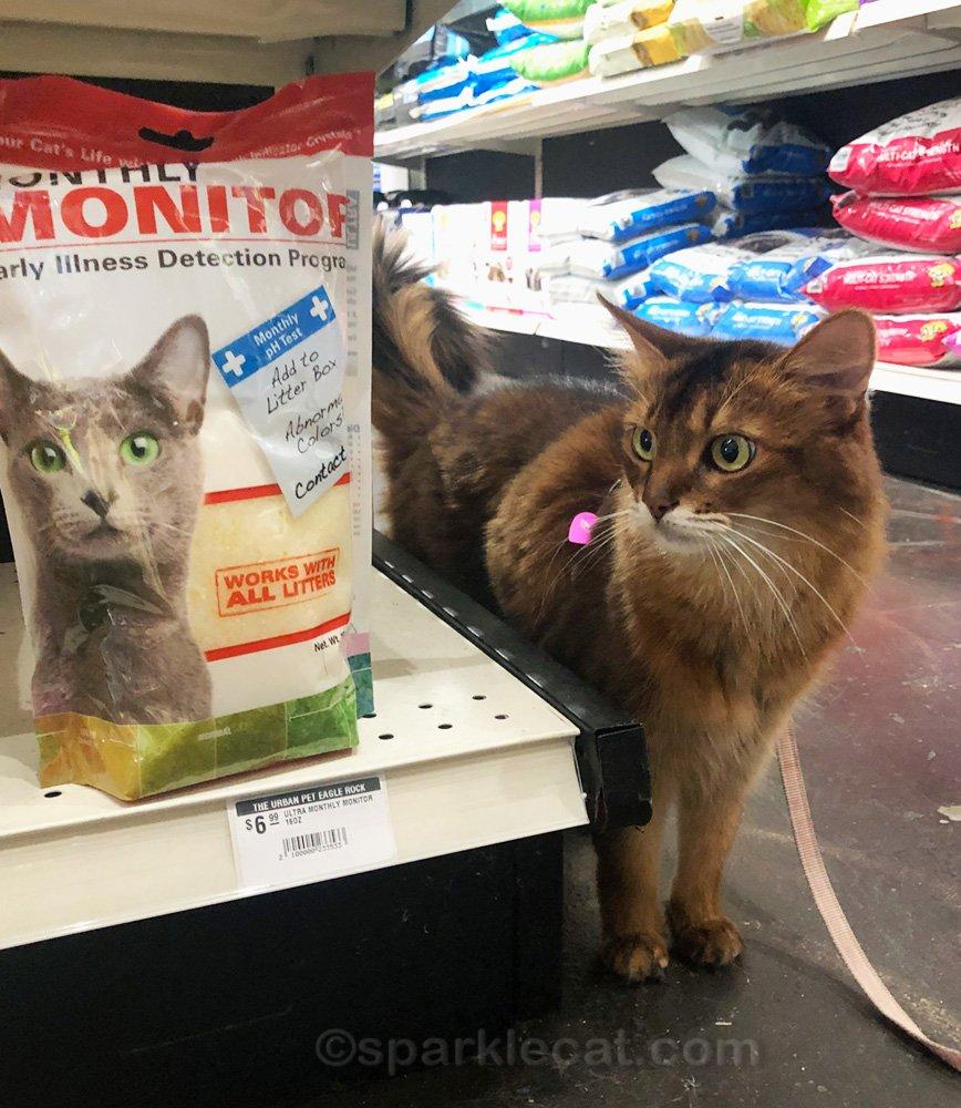 Somali cat looking down aisle at pet shop