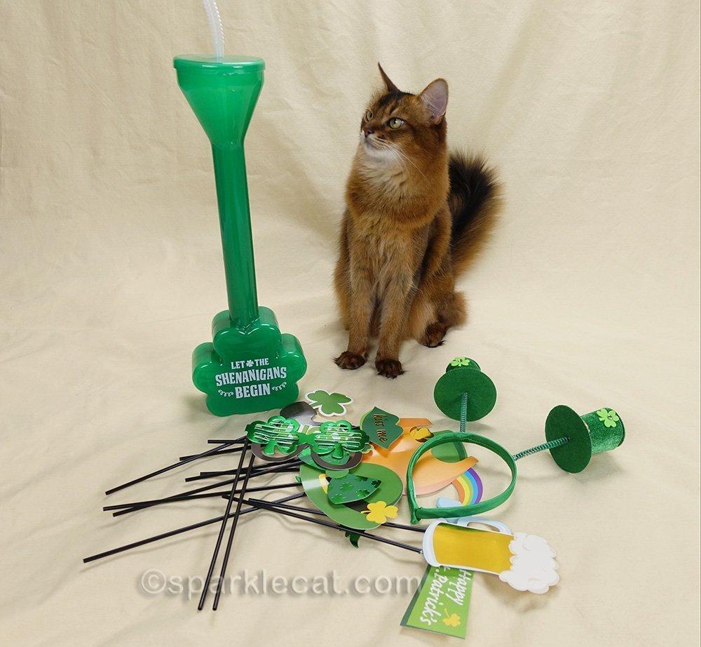 somali cat looking dubiously at St. Patricks props