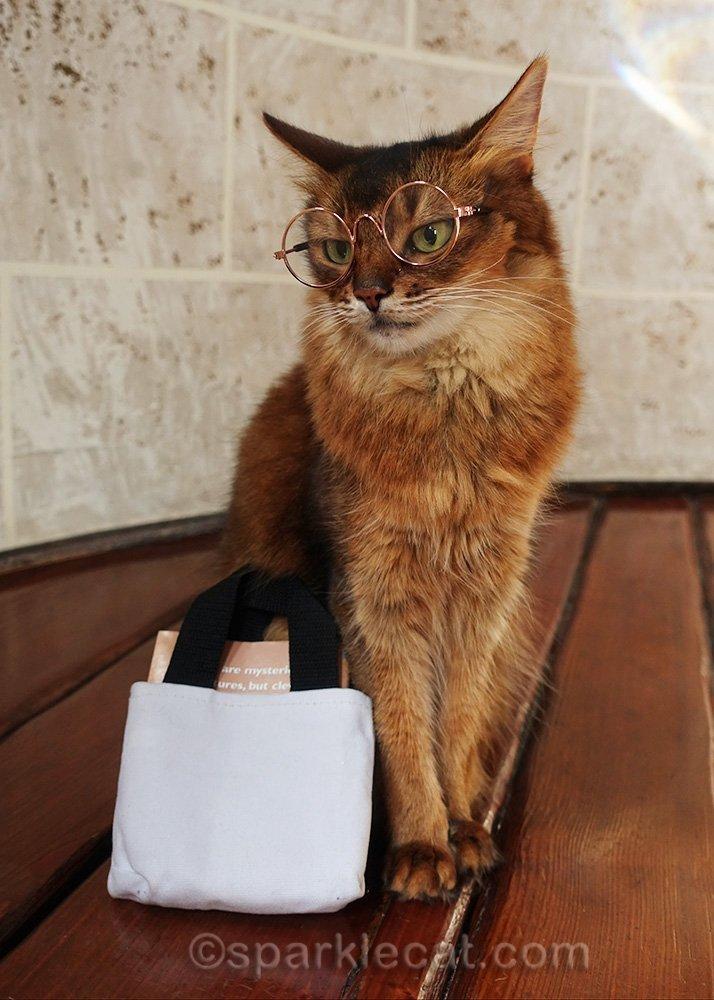somali cat with book bag