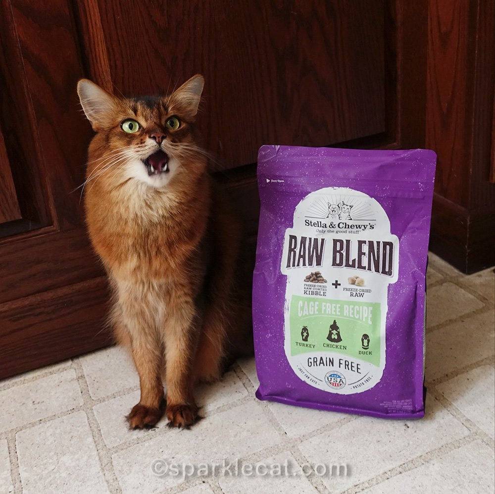 somali cat with open mouth next to bag of cat food