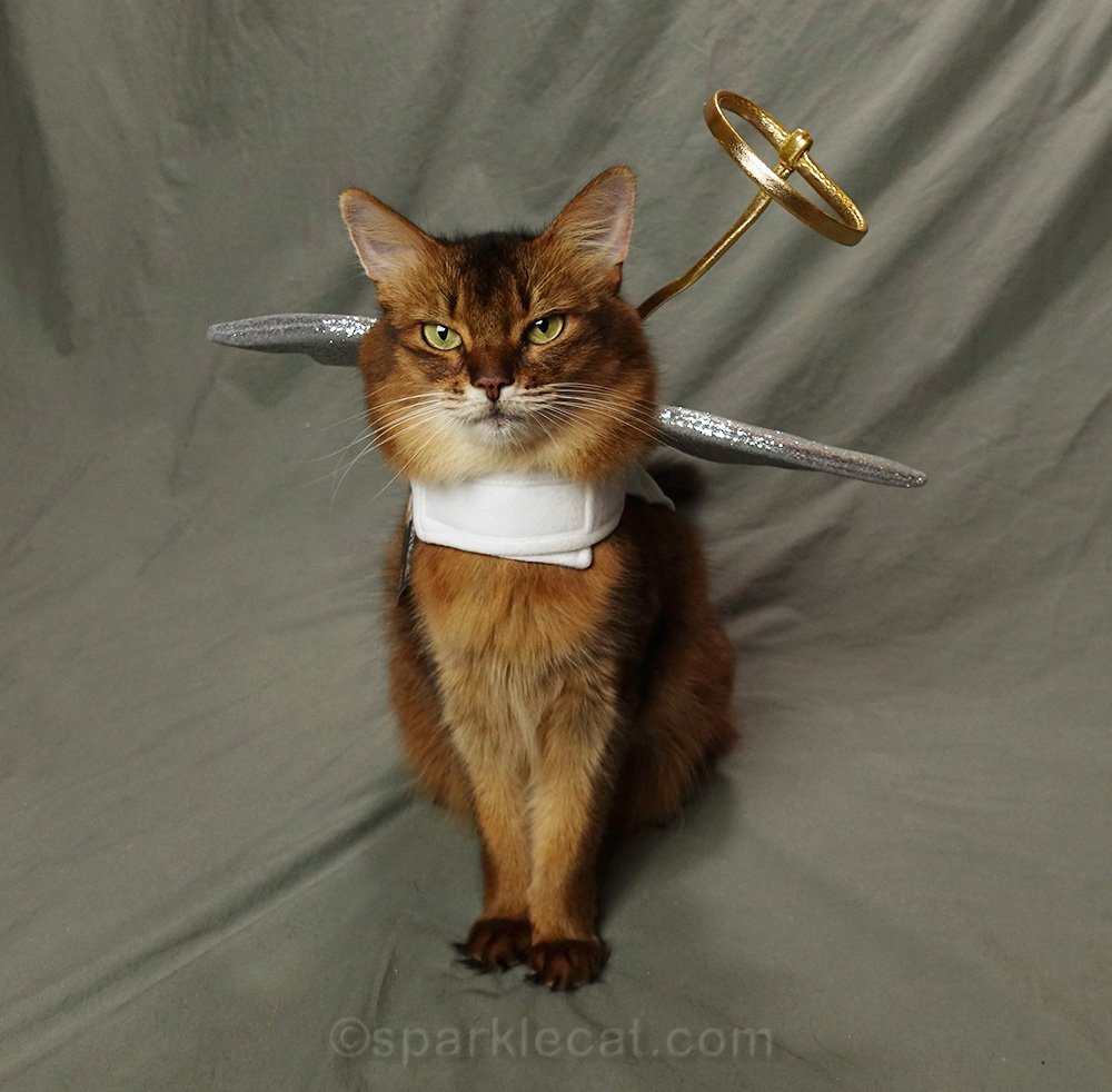 somali cat in cat angel costume with crooked halo