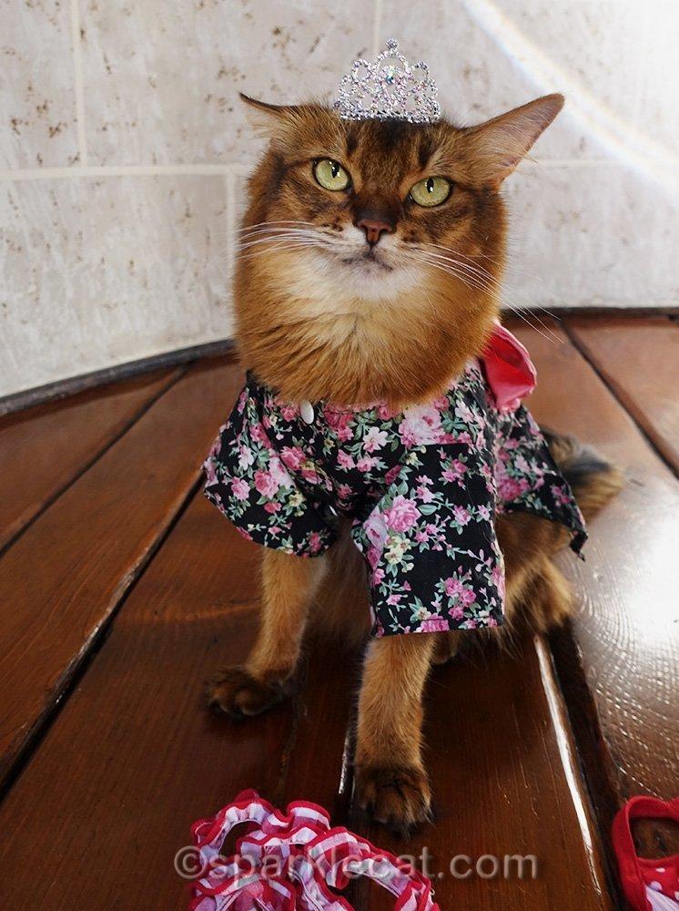 somali cat in kimono wearing a tiara