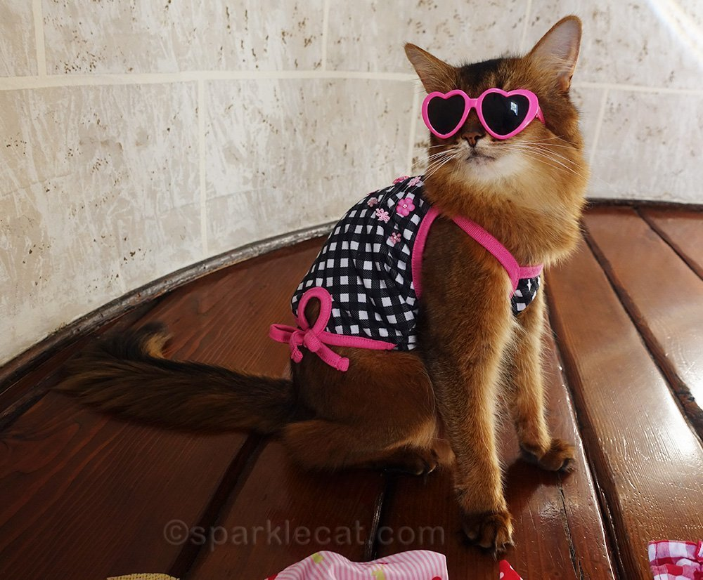 somali cat in tank top and pink heart sunglasses