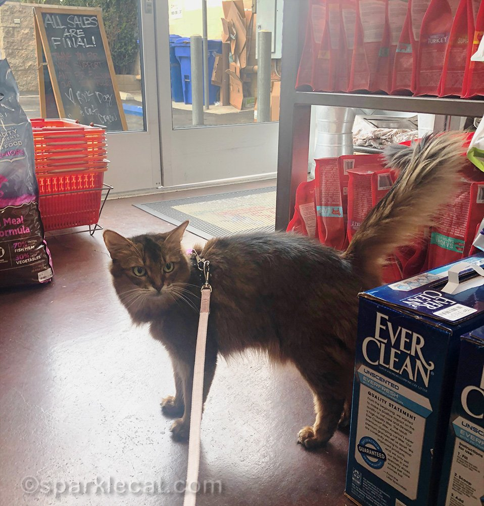 Summer and her human have a quick shopping trip to the local pet store.
