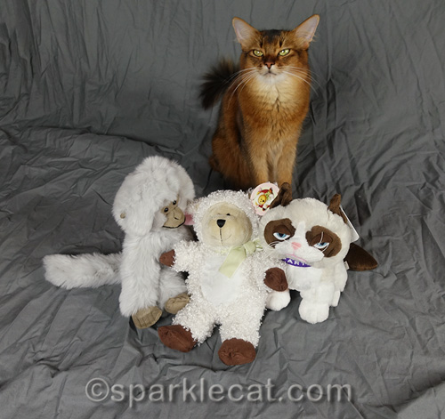somali cat posing with her stand-in stuffies