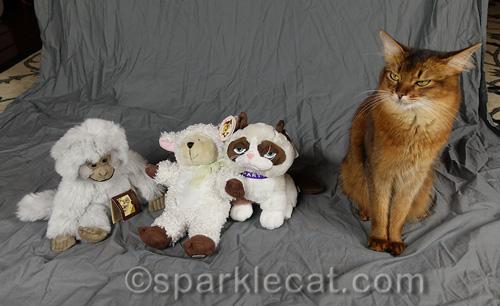 somali cat glaring at stuffie stand-ins