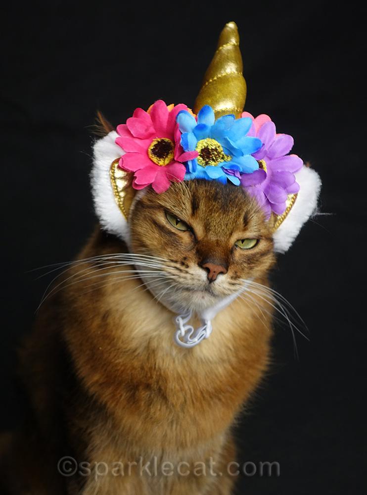 somali cat dubious about wearing uni-kitty headdress