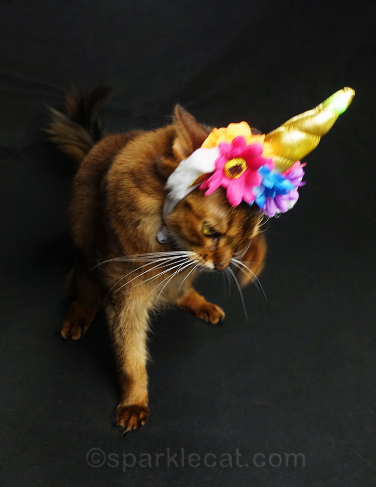 somali cat taking off unicorn headdress