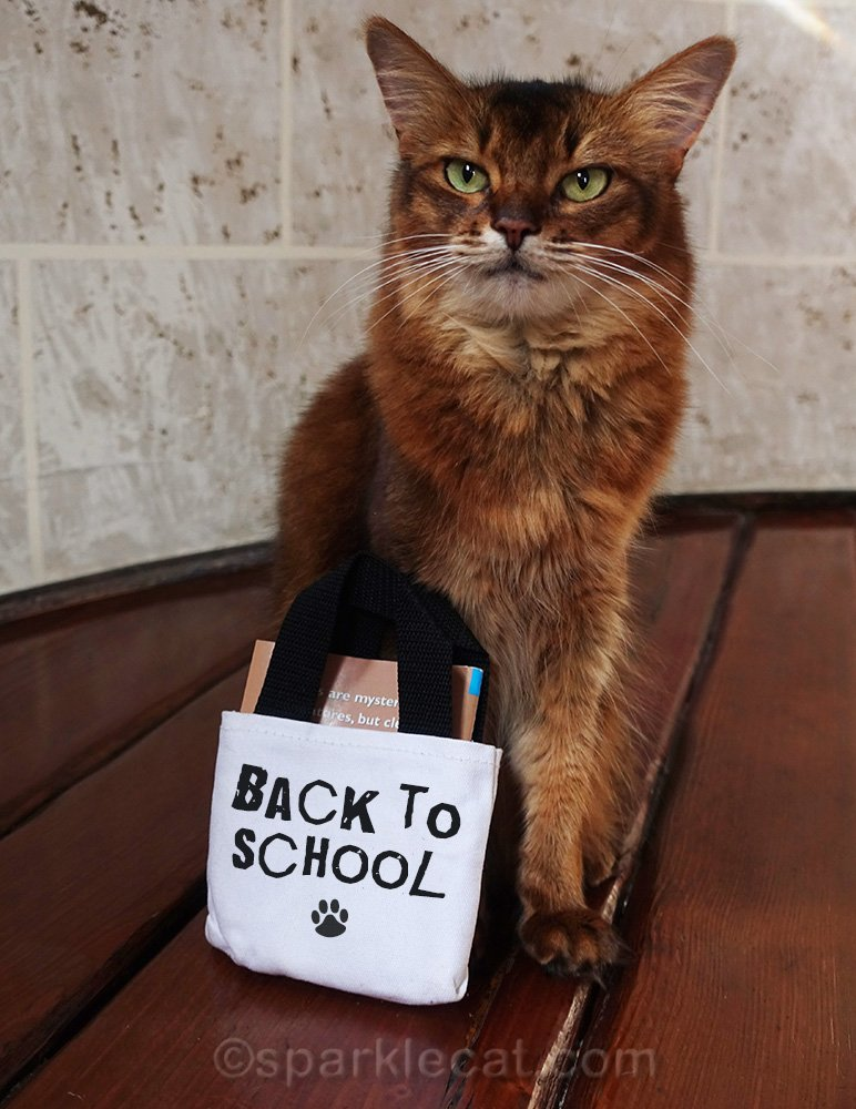 Summer shares some cat themed back-to-school items from Etsy, mostly.