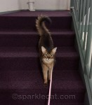 All show kitties must know how to make a proper entrance