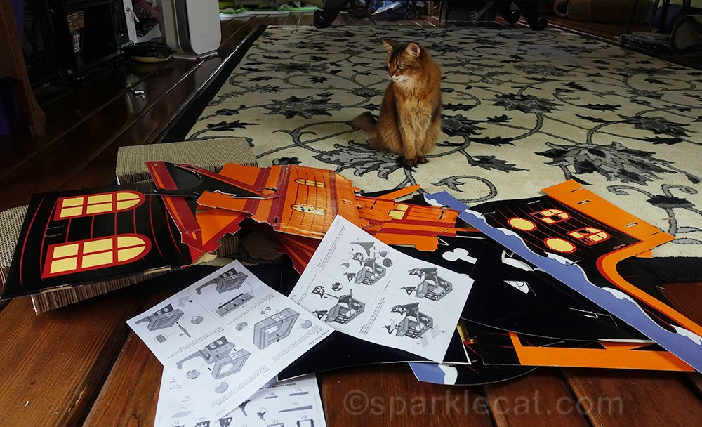 somali cat with pieces of pirate kitty ship, and instructions