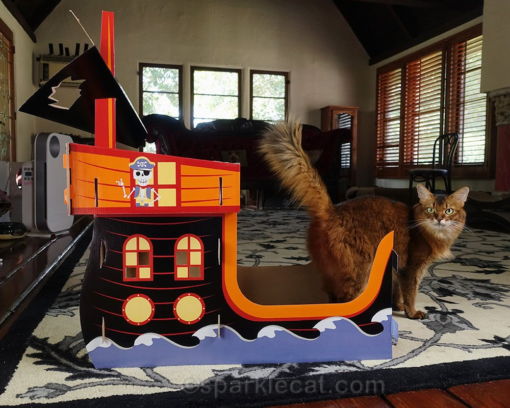 somali cat with back half of Target pirate cat ship