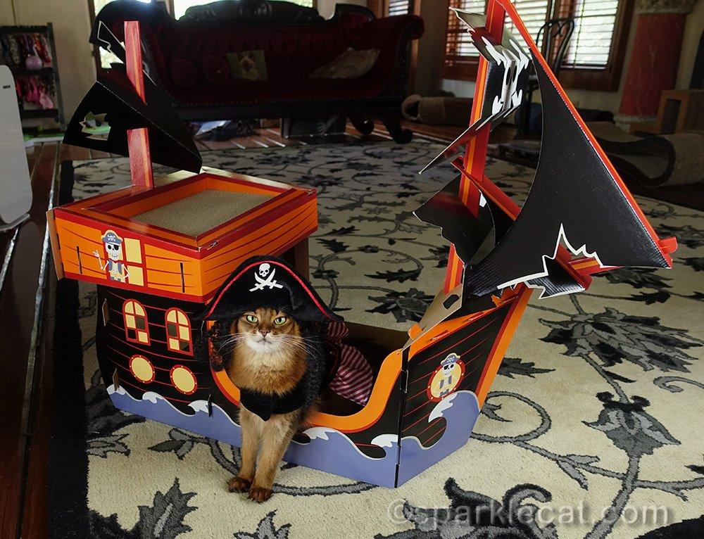 somali cat in pirate costume with cat pirate ship