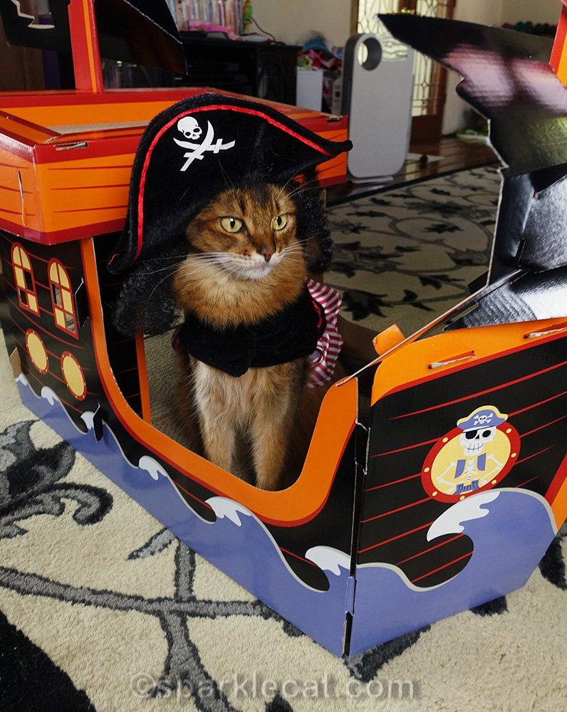 somali cat posing in Target pirate cat scratcher