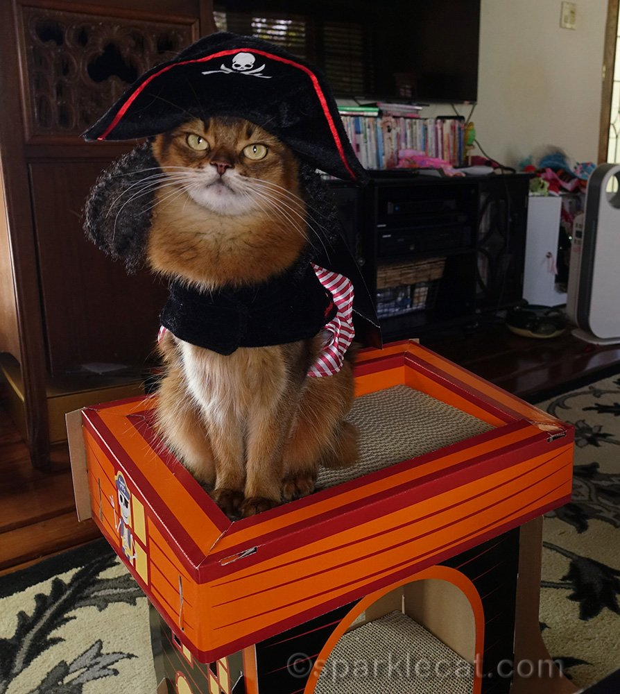 somali cat in pirate costume on top tier of kitty pirate ship from Target
