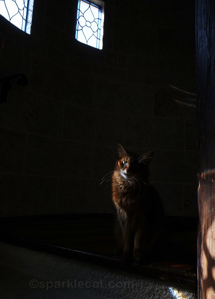 Shadowy shot of Somali cat at top of turret