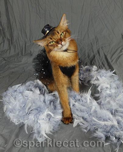 photo shoot of somali cat in black dress surrounded by silver feathers