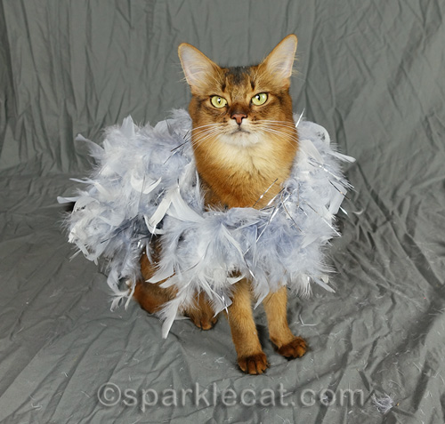 somali cat wrapped in silver feathers