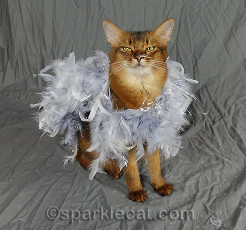 somali cat wrapped in silver feathers with a feather on her nose