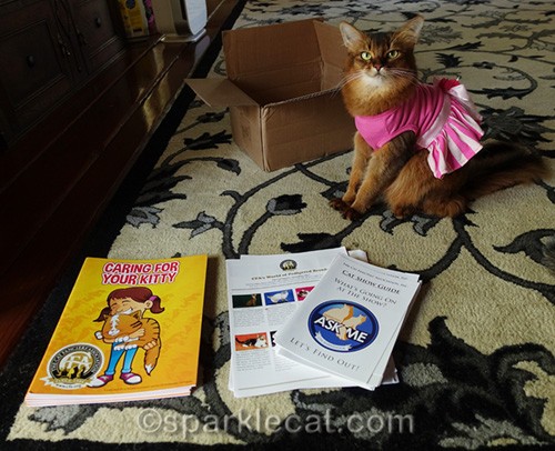 somali cat with special cat show materials