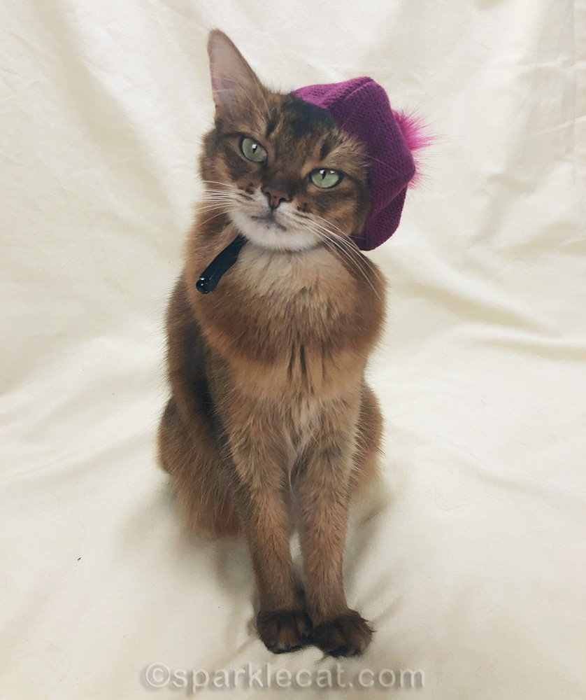somali cat wearing raspberry beret over one ear