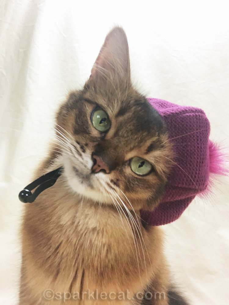 somali cat selfie with raspberry beret and head tilt