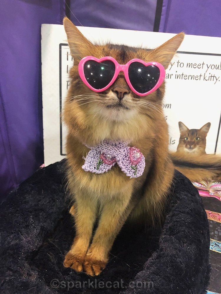 somali cat in pink heart sunglasses and knit scarf