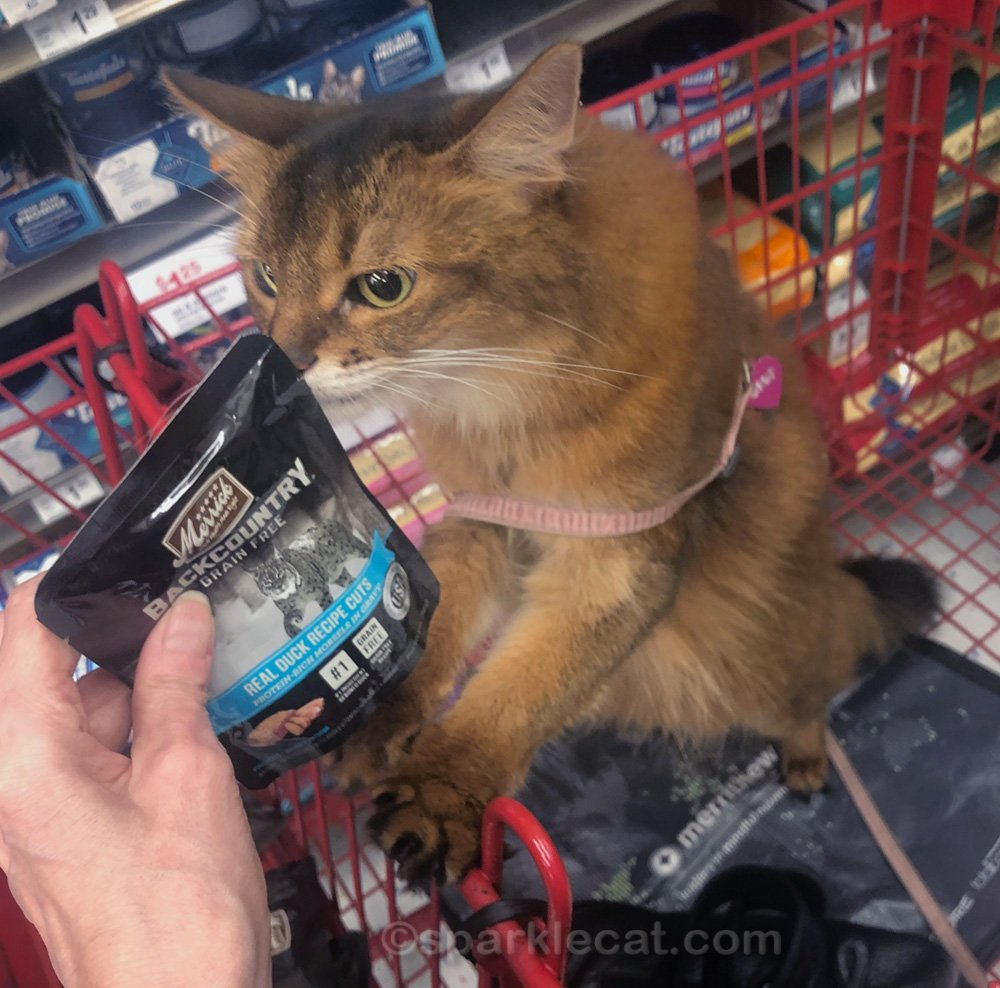 somali cat checking out cat food for the outside kitties