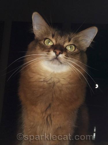 somali cat selfie with selfie light