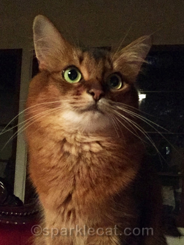 somali cat nighttime selfie without selfie light