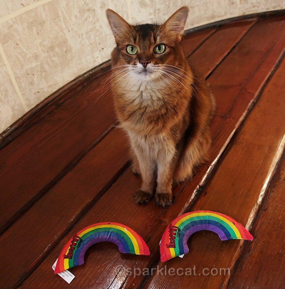 somali cat with two Yeowww catnip rainbows