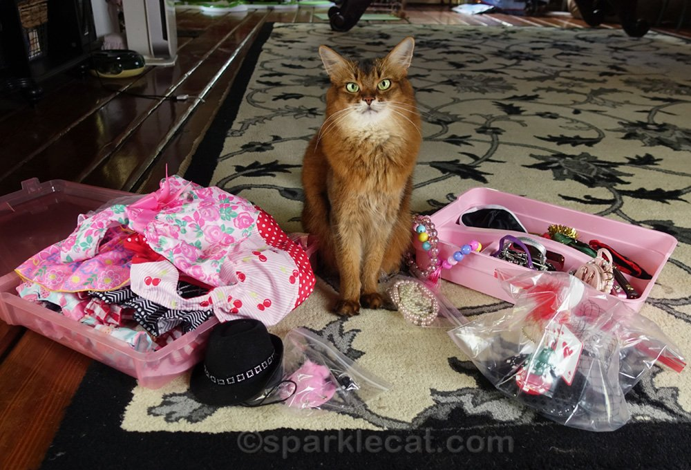 Summer chooses outfits for her first cat show in a year and a half, and there is even video of her doing it.