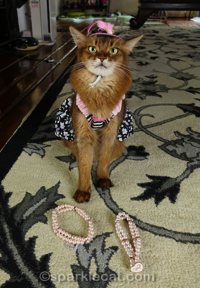 Somali cat in dress and hat, checking out necklaces