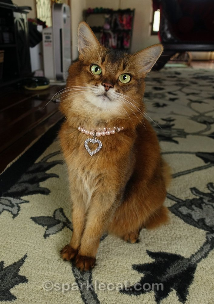 Somali cat wearing a simple necklace with crystal heart