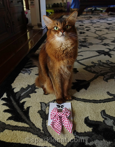 somali cat with new bow tie