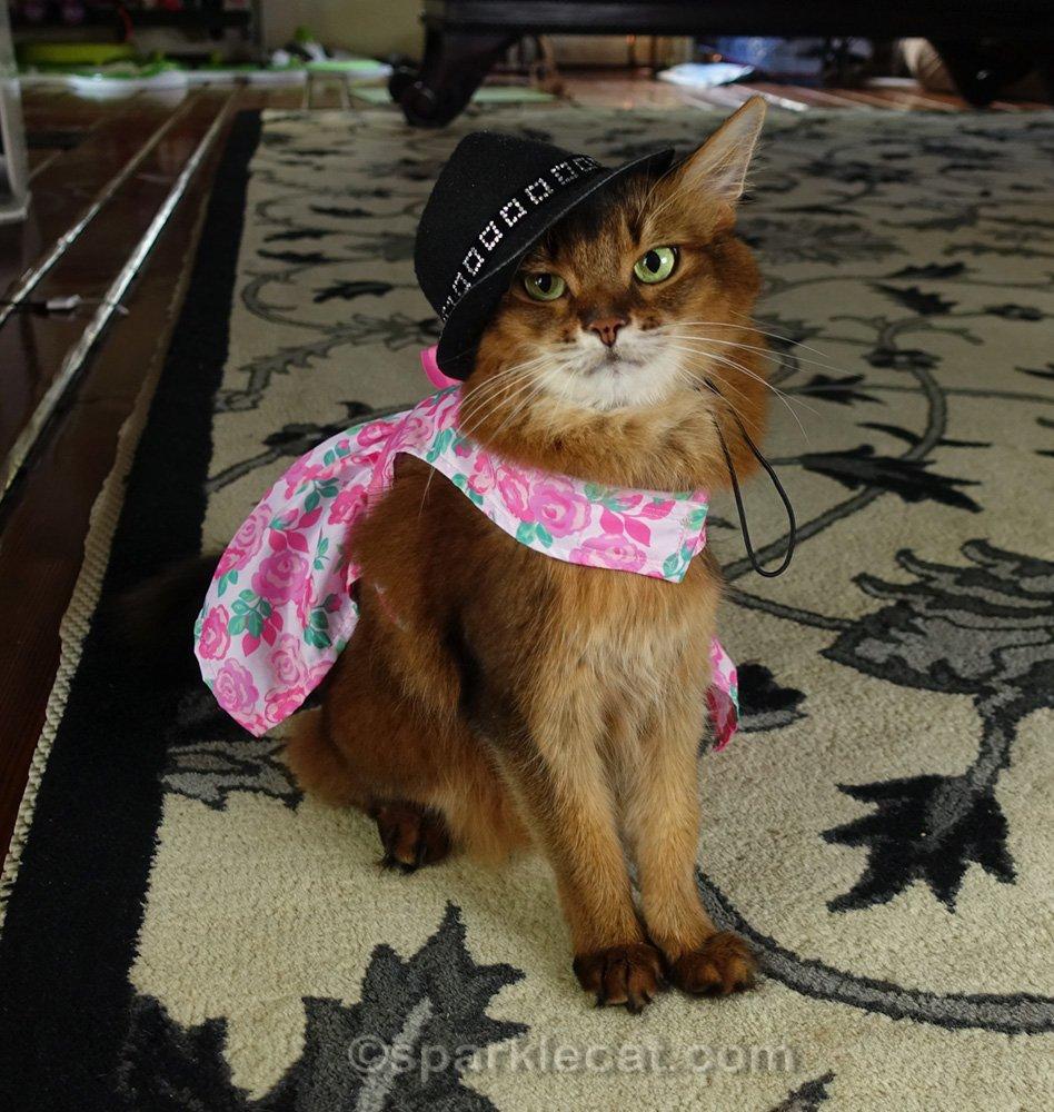 Somali cat wearing pretty dress and non-matching panama hat