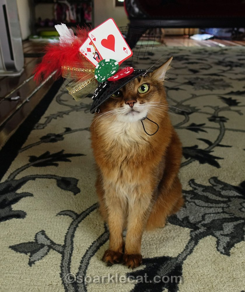 Somali cat wearing cute gambling hat