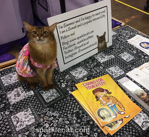 Somali cat in dress as Pet Me Cat at Glendale cat show