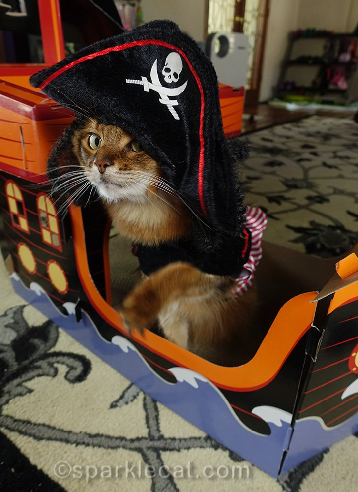 somali cat in pirate costume looking sneaky