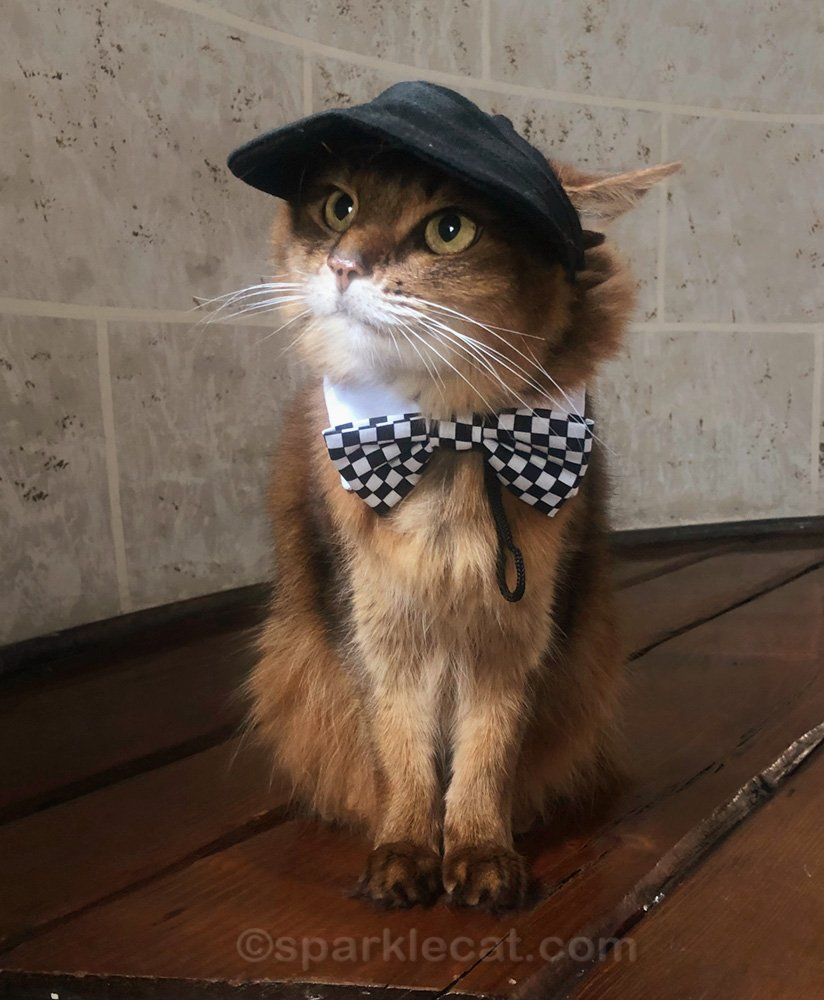 Somali cat dressed up as Rick Nielsen