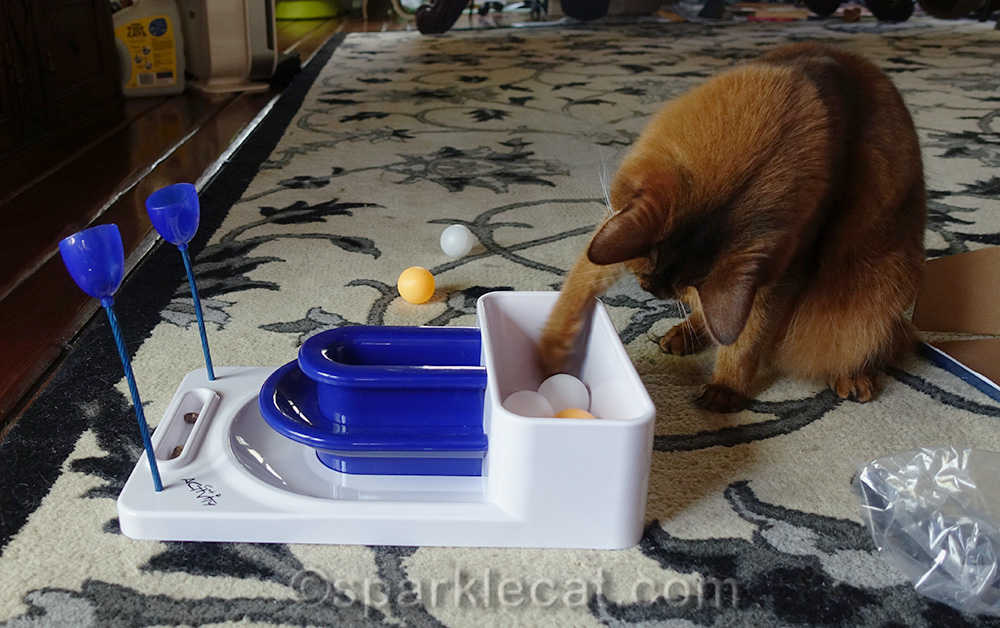 Somali cat trying out the Digging Module of the Fantasy Board