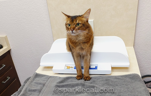 reducing cat stress during veterinary visits - 500×317