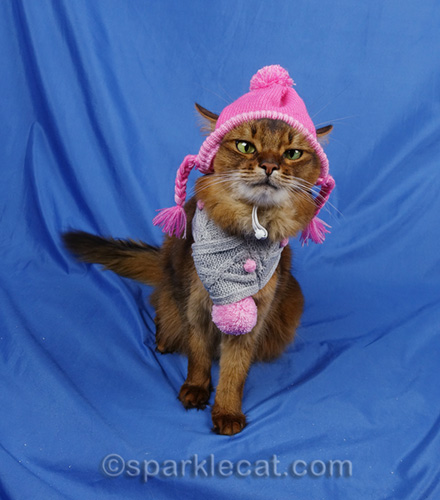 somali cat with winter scarf and hat