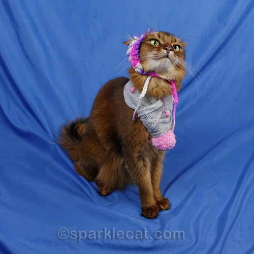 somali cat making a face in a chullo hat and scarf