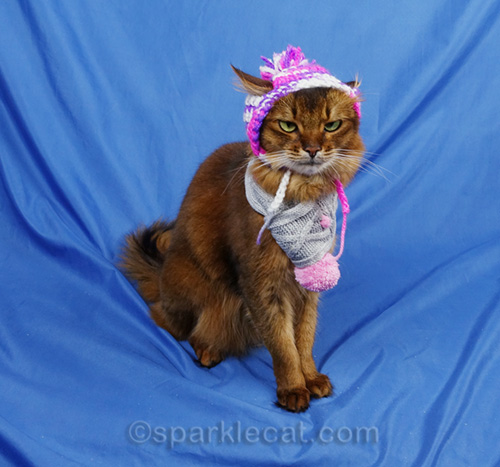 somali cat unhappy about wearing chullo hat
